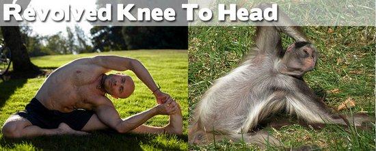 Όταν τα ζώα κάνουν μαθήματα Yoga (7)