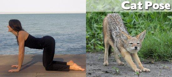 Όταν τα ζώα κάνουν μαθήματα Yoga (9)