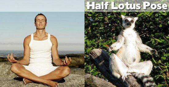 Όταν τα ζώα κάνουν μαθήματα Yoga (10)