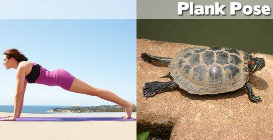 Όταν τα ζώα κάνουν μαθήματα Yoga (11)
