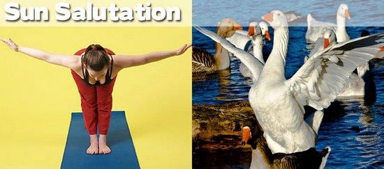 Όταν τα ζώα κάνουν μαθήματα Yoga (15)