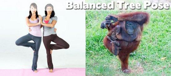 Όταν τα ζώα κάνουν μαθήματα Yoga (17)