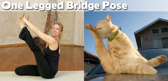Όταν τα ζώα κάνουν μαθήματα Yoga (18)