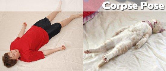Όταν τα ζώα κάνουν μαθήματα Yoga (19)