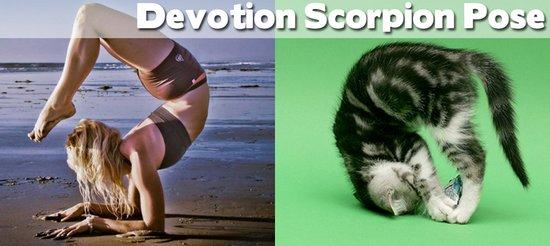 Όταν τα ζώα κάνουν μαθήματα Yoga (24)