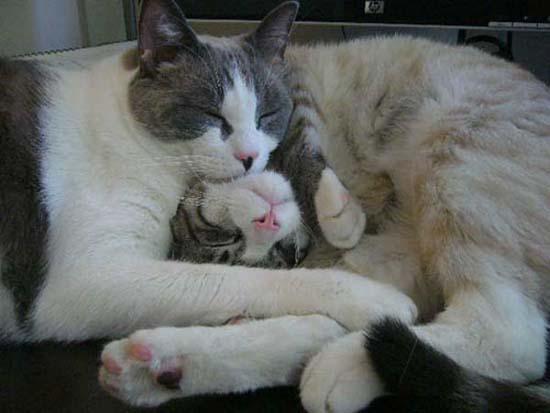 Οι πιο παράξενες στάσεις ύπνου για γάτες (3)