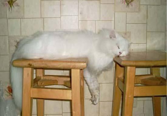 Οι πιο παράξενες στάσεις ύπνου για γάτες (4)