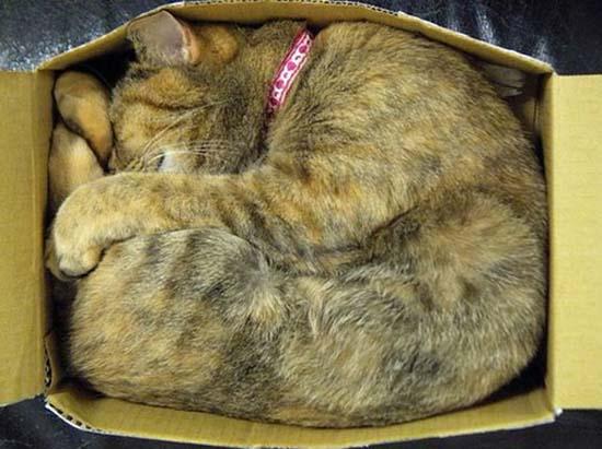 Οι πιο παράξενες στάσεις ύπνου για γάτες (8)