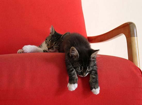 Οι πιο παράξενες στάσεις ύπνου για γάτες (9)