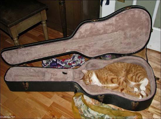 Οι πιο παράξενες στάσεις ύπνου για γάτες (11)