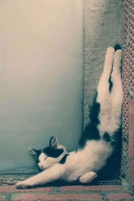 Οι πιο παράξενες στάσεις ύπνου για γάτες (14)