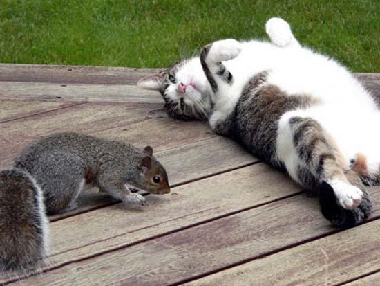 Οι πιο παράξενες στάσεις ύπνου για γάτες (15)