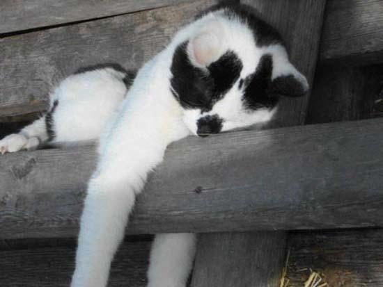 Οι πιο παράξενες στάσεις ύπνου για γάτες (16)