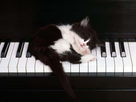 Οι πιο παράξενες στάσεις ύπνου για γάτες (18)
