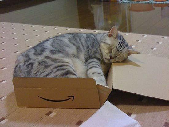 Οι πιο παράξενες στάσεις ύπνου για γάτες (19)