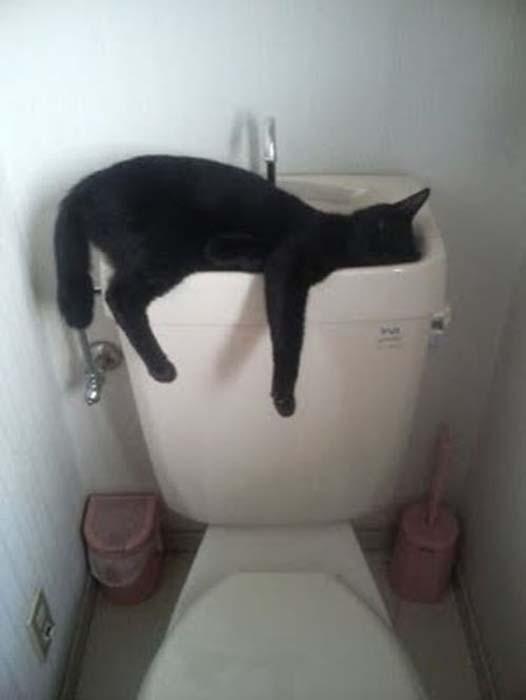 Οι πιο παράξενες στάσεις ύπνου για γάτες (20)