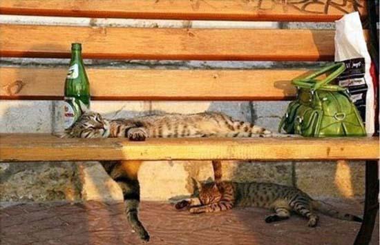 Οι πιο παράξενες στάσεις ύπνου για γάτες (24)