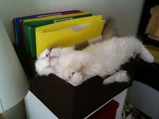 Οι πιο παράξενες στάσεις ύπνου για γάτες (25)