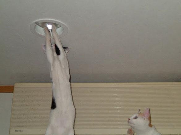 Πόσες γάτες χρειάζονται για να αλλάξουν μια λάμπα;   Φωτογραφία της ημέρας