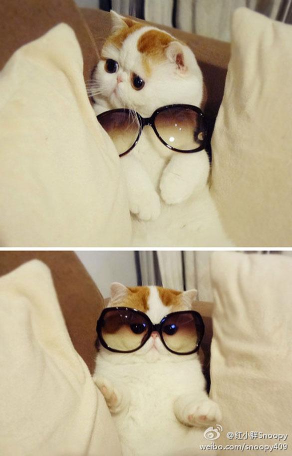 Της πάνε αυτά τα γυαλιά; | Φωτογραφία της ημέρας