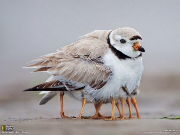 Πουλί με 10 πόδια;   Φωτογραφία της ημέρας