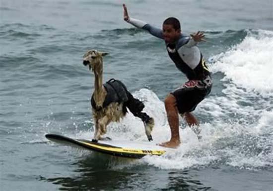 Οι 10 πιο παράξενοι surfers (7)