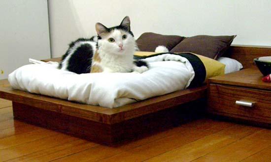 Πολυτελή έπιπλα για γάτες (4)
