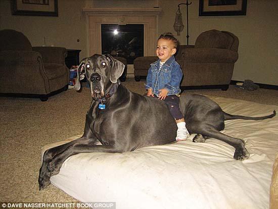 Ο ψηλότερος σκύλος στον κόσμο (1)