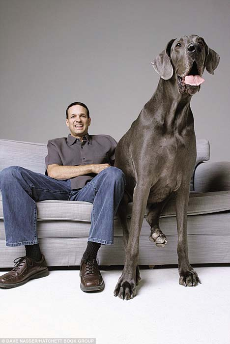 Ο ψηλότερος σκύλος στον κόσμο (8)