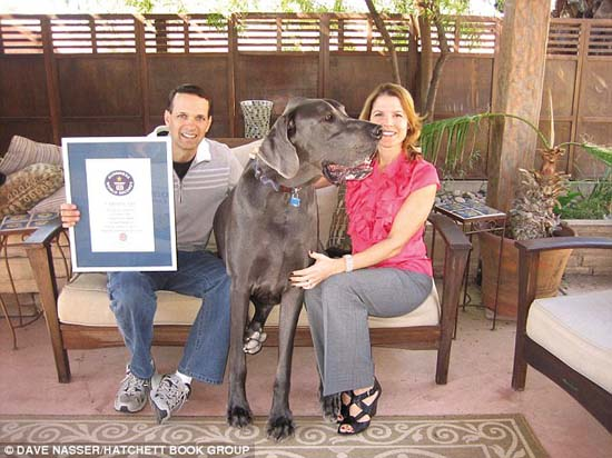 Ο ψηλότερος σκύλος στον κόσμο (9)