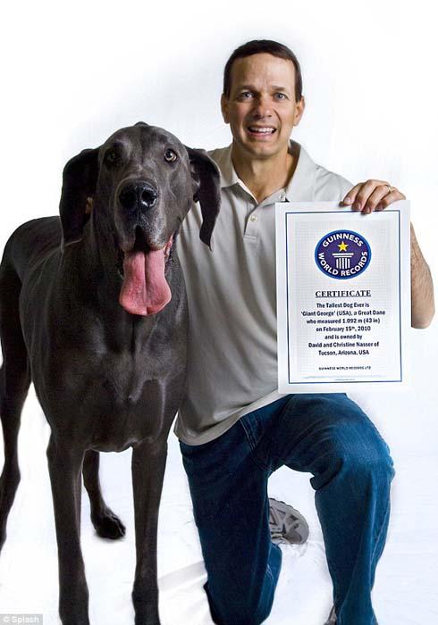 Ο ψηλότερος σκύλος στον κόσμο (12)