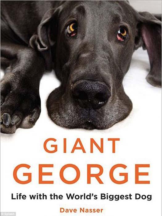 Ο ψηλότερος σκύλος στον κόσμο (13)
