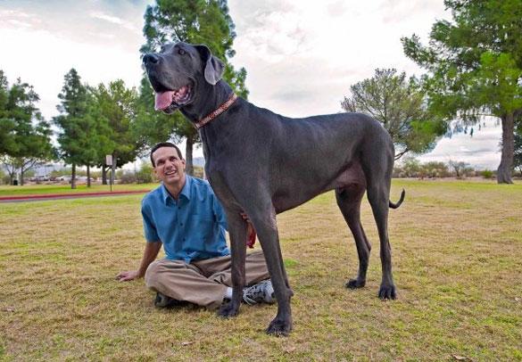 Ο ψηλότερος σκύλος στον κόσμο (14)
