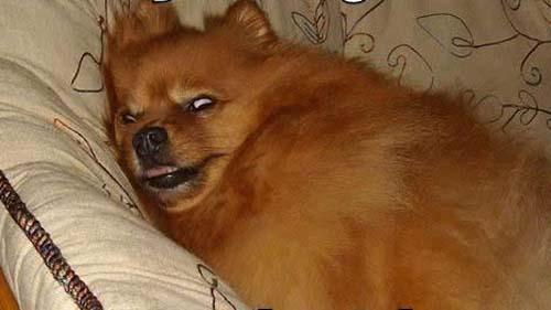 Σκύλοι με... τρέλα στα μάτια! (1)