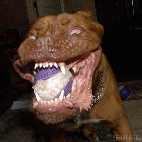 Σκύλοι με... τρέλα στα μάτια! (2)