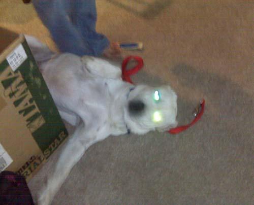 Σκύλοι με... τρέλα στα μάτια! (7)