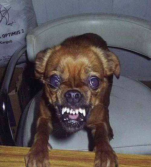 Σκύλοι με... τρέλα στα μάτια! (8)