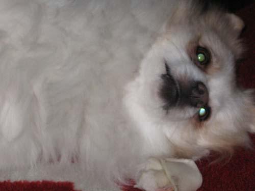 Σκύλοι με... τρέλα στα μάτια! (12)