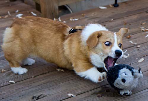 Σκύλοι με... τρέλα στα μάτια! (13)