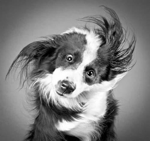 Σκύλοι με... τρέλα στα μάτια! (15)