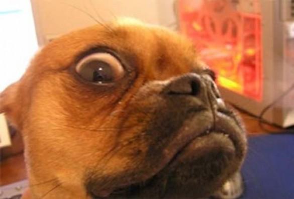 Σκύλοι με... τρέλα στα μάτια! (18)