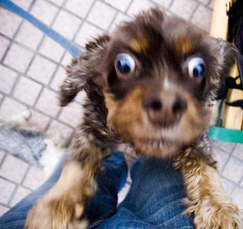 Σκύλοι με... τρέλα στα μάτια! (21)