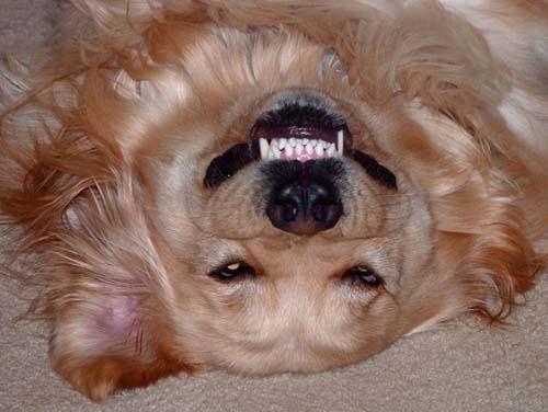 Σκύλοι με... τρέλα στα μάτια! (22)