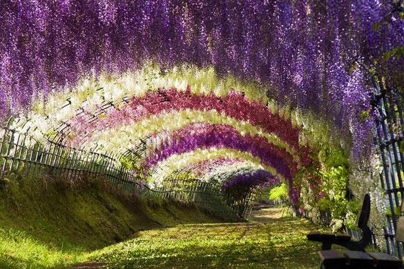 Τούνελ από λουλούδια στην Ιαπωνία μοιάζει βγαλμένο από παραμύθι | Otherside.gr