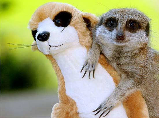 Χαριτωμένα ζώα με... λούτρινους κλώνους (5)