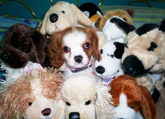 Χαριτωμένα ζώα με... λούτρινους κλώνους (12)