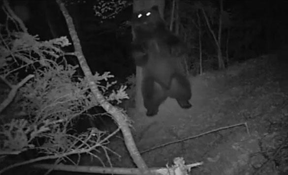 Ξεκαρδιστικός χορός αρκούδας στο δάσος τη νύχτα