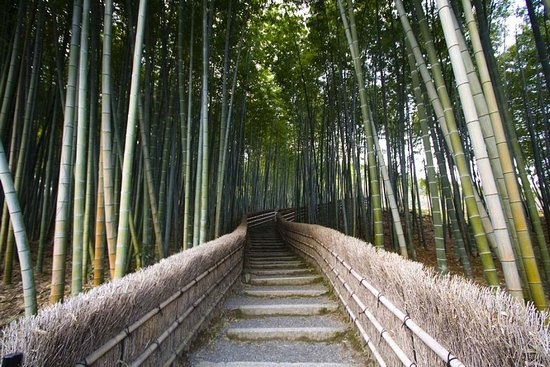 Υπέροχο δάσος από Bamboo στο Kyoto (1)