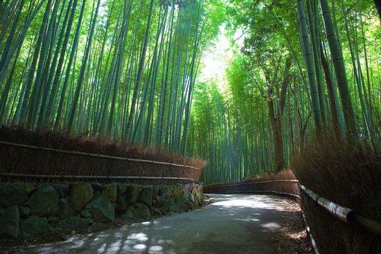 Υπέροχο δάσος από Bamboo στο Kyoto (2)