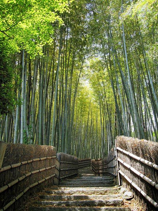 Υπέροχο δάσος από Bamboo στο Kyoto (3)
